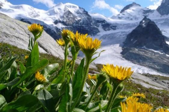 Pengaruh Suhu Terhadap Pertumbuhan Tanaman